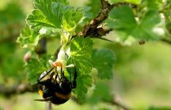 pollination Arkivbilder