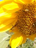 pollination imagens de stock