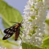 pollination Royaltyfri Bild
