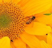 Pollination Stock Photography