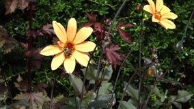 pollination видеоматериал