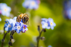 pollination Imagem de Stock Royalty Free