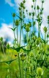 pollination Стоковые Изображения