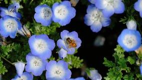 pollination Стоковые Фотографии RF