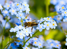 Pollination bee on the flower stock image