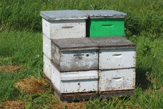 Pollination beehive, white and green wooden box beekeeping at the farm. White and green beehive for pollination at the farm royalty free stock photo