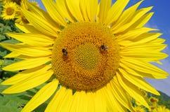 Pollination, blomma och bin Arkivbild