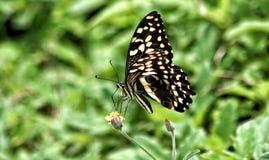 Pollination i blomningväxt Fotografering för Bildbyråer