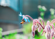 Pollination Royalty Free Stock Images