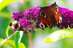 pollinators Imagens de Stock Royalty Free