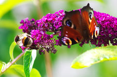 Pollinators Royalty Free Stock Images