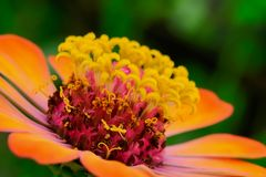 polline Immagini Stock Libere da Diritti