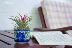 Polline rosa del bracteatus dell'ananas in vaso da fiori Fotografia Stock