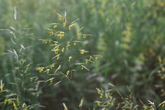 Polline sull'erba fotografie stock