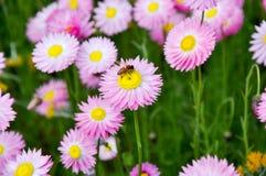 pollinisateur photos stock
