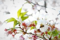 Pollinisateur du ` s de nature photographie stock libre de droits