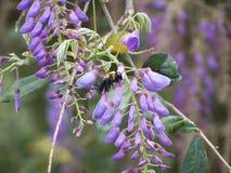 Pollinisation photographie stock