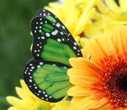 Pollinisation image stock