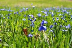 Pollinisation d'abeille avec la fleur images stock
