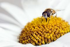 Pollinisation dans le printemps photos stock