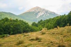 Pollino nationaal park stock afbeeldingen