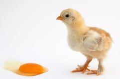Pollo Imagenes de archivo