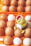 Pollo amarillo que se sienta encima de los huevos en bandeja anaranjada Imagen de archivo libre de regalías