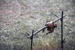 Pollo arrosto con lo spiedo di bambù sul camino dal carbone di legno del fuoco di accampamento e della legna da ardere nella fore fotografie stock libere da diritti