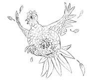 Pollo asustado Imagenes de archivo