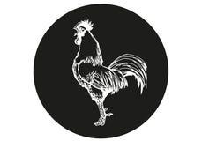 Pollo bianco su fondo nero Illustrazione Vettoriale