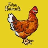 Pollo coloreado castaña Foto de archivo