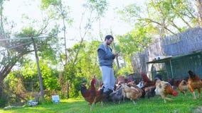 Pollo d'alimentazione dell'uomo caucasico dell'agricoltore, pulcino che mangia l'esca dell'alimento archivi video