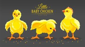 Pollo de la gallina Pequeños pájaros nacionales recién nacidos de las aves de corral Ilustración del vector libre illustration