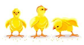 Pollo de la gallina Peque?os p?jaros nacionales reci?n nacidos de las aves de corral Ilustraci?n del vector stock de ilustración