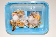 Pollo de la parrilla con el molde Fotos de archivo libres de regalías
