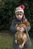 Pollo de la pizca del bebé Fotografía de archivo