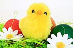 Pollo de Pascua Fotos de archivo