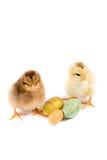 Pollo de Pascua, huevos de Pascua, tarjeta de pascua en el fondo blanco imagenes de archivo