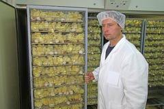 Pollo del bambino in incubatrice Fotografie Stock Libere da Diritti