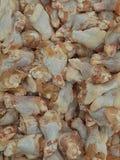 Pollo del becerro Foto de archivo