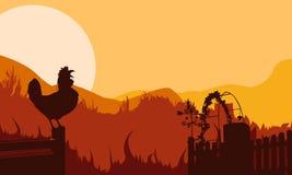 Pollo del fondo nella siluetta della foresta di tramonto Fotografia Stock