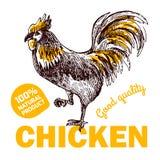 Pollo dell'azienda agricola di Eco Immagini Stock