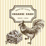 Pollo dell'azienda agricola di Eco Fotografia Stock Libera da Diritti