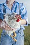 Pollo della holding del coltivatore Fotografia Stock Libera da Diritti