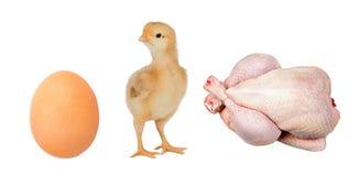 Pollo di industria Immagini Stock