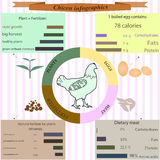Pollo di Infographics Sostanze minerali in carne, uova, fertiliz Fotografia Stock Libera da Diritti