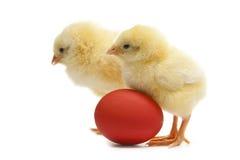 Pollo dos con el huevo de Pascua Fotografía de archivo libre de regalías