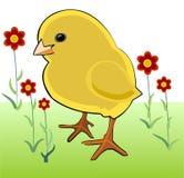 Pollo e fiori di thema della primavera illustrazione vettoriale