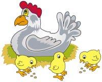 Pollo e pulcini Immagine Stock