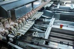 Pollo ed uova crudi freschi sul nastro trasportatore Immagini Stock